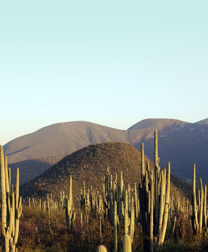 Oaxaca sede del Primer Foro Nacional  De Áreas Destinadas a laConservación